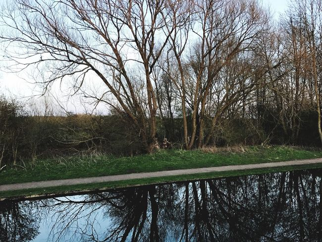 Trees on canal Tree Nature Tranquility Beauty In Nature Bare Tree Water Tranquil Scene Sky Outdoors Scenics Growth Day No People Grass Landscape Willow Tree