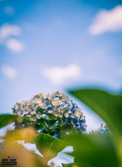 Beauty In Nature Close-up Cloud Cloud - Sky Day Flower Focus On Foreground Fragility Freshness Green Color Growth Leaf Nature No People Outdoors Plant Selective Focus Sky South Africa Tranquility Water