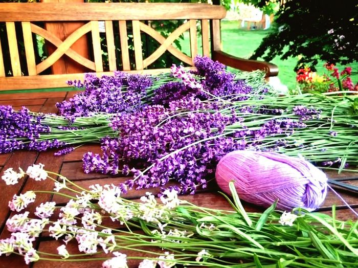 lavender from our garden Lavender Color Lavender Flowers Lavender Plant Flower Flowering Plant Freshness Purple Nature