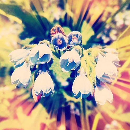 Photo Art Flowers Nature Spring Sun