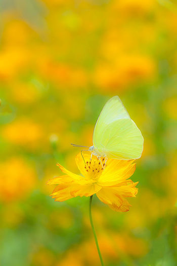 Animal Themes Animals In The Wild Beauty In Nature Close-up Day Flower Flower Head Fragility Freshness Growth Insect Nature No People One Animal Outdoors Plant