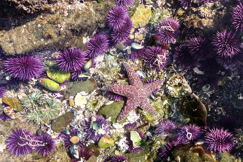 Coastal creatures. Purple No People Nature Sea Life Beauty In Nature Flower Outdoors UnderSea Day Close-up