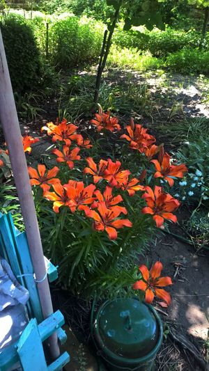 Orange Color Growth Nature Beauty In Nature No People Flower Plant Leaf Outdoors Day Tree Freshness