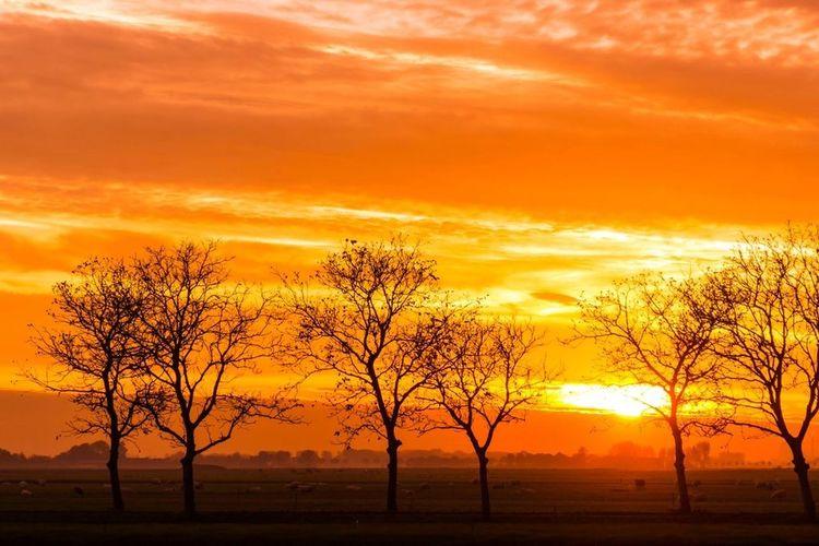 Sundown Nature