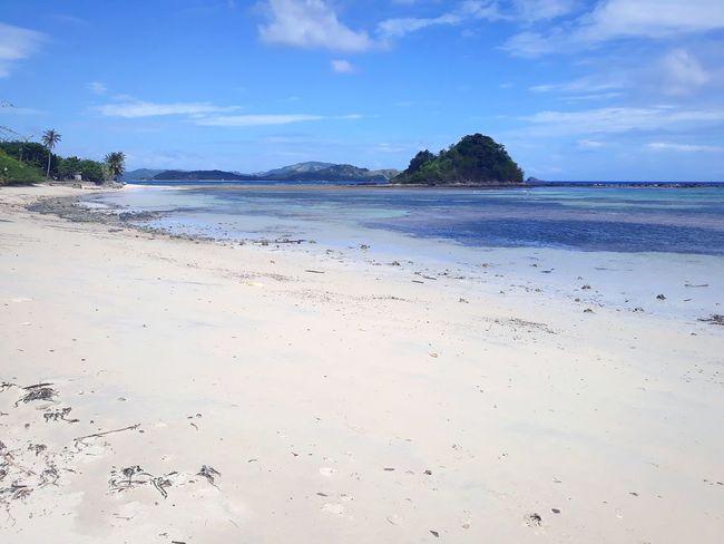 UnderSea Tree Water Swimming Sea Palm Tree Beach Coconut Scuba Diving Sand Seascape Tide Surf Rushing