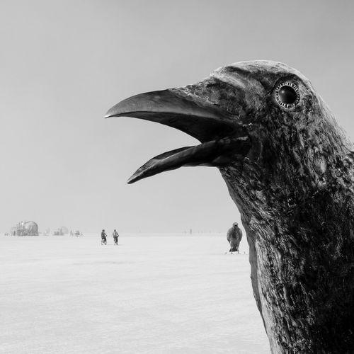 Burning Man 2016 Ravens Art Art Is Everywhere Artist Arts Culture And Entertainment ArtWork Bicycle Bird Birds BM BM2016 Burningman BurningManFestival Corbeau Desert Oiseau Oiseaux Raven Raven - Bird EyeEmNewHere