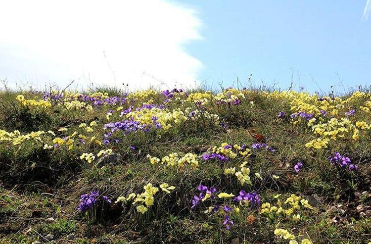 Fiori Flowers Lulepranverore Natura Landscapecaptures Campi Spring Pranvere