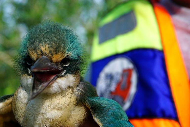 little Bird Bird Multi Colored Close-up