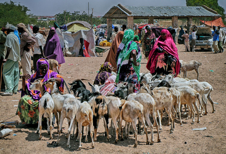 Domestic Animals Mammal Group Of Animals Domestic Pets Livestock Large Group Of People Vertebrate Day Large Group Of Animals Crowd Real People Nature Group Of People Men Market Sunlight Herbivorous Herd