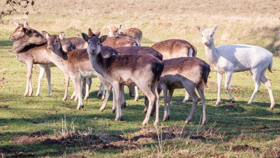 Deer Outdoors Nature Animal Themes Mammal Animal Wildlife No People Animal Group Of Animals Herd Land Herbivorous Animal Family Standing