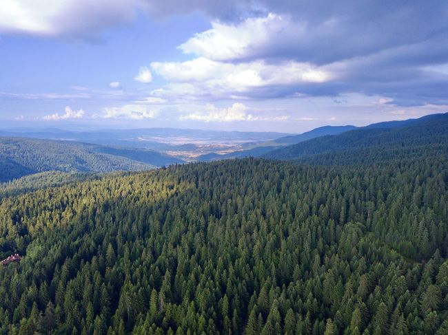 Drone  Beauty In Nature Cloud - Sky Coniferous Tree Day Dronephotography Droneshot Environment Forest Green Color Growth Idyllic Land Landscape Mountain Nature No People Non-urban Scene Outdoors Pine Tree Pine Woodland Plant Scenics - Nature Sky Tranquil Scene Tranquility Tree