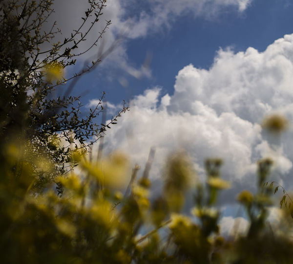 Plant Sky Cloud - Sky Beauty In Nature Nature No People Growth Selective Focus Day Tranquility Flower Flowering Plant Tree Low Angle View Outdoors Yellow Sunlight Vulnerability  Fragility Close-up Springtime