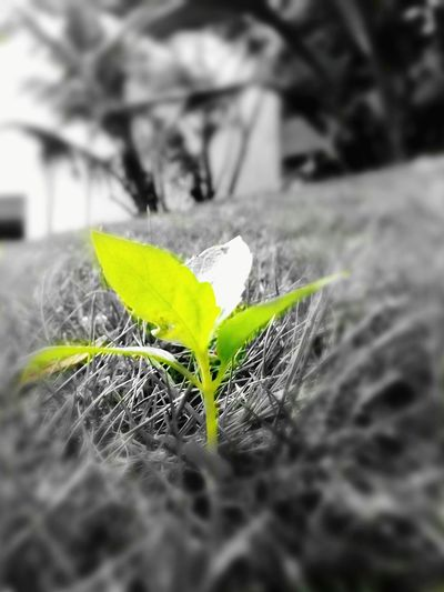 B&w Photography B&w Beauty In Nature Naturelovers Outdoors Nature Eyeemnaturelover No Edit No Fun Newlife💛 Newlife :D