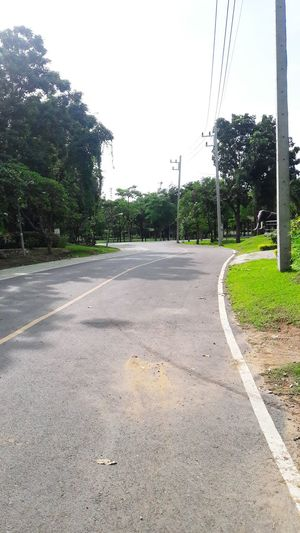 street way Tree