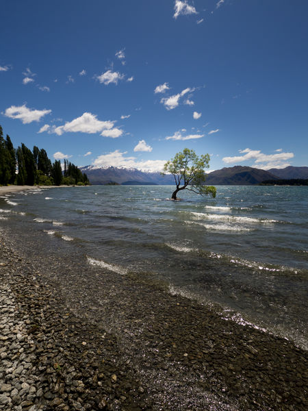 New Zealand Beauty New Zealand Scenery New Zealand Landscape Tree Wanaka Beach Beauty In Nature Day Mountain Nature New Zealand No People Outdoors Sand Scenics Sea Sky Sunlight Tranquility Tree Wanaka Tree Wanakalake Water