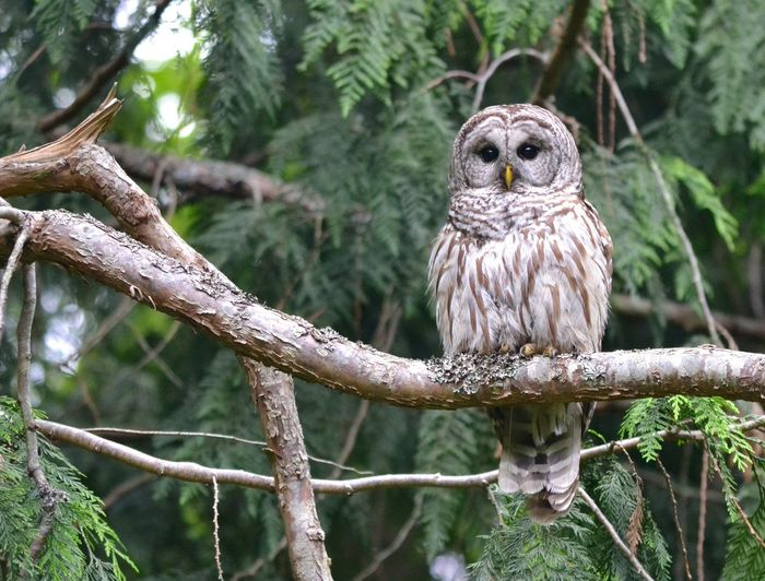Portrait of owl perching on tree