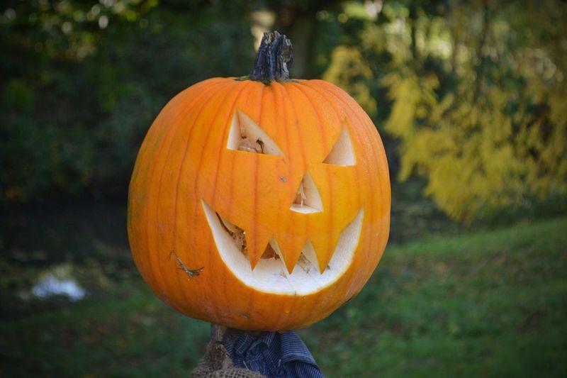 Close-up of pumpkin on orange pumpkins during autumn