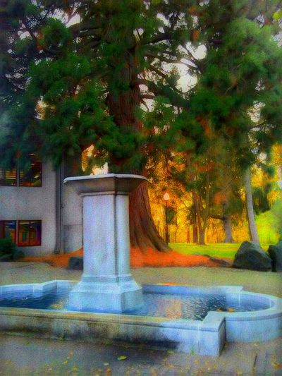 The last little bit of Summer.... 2016 EyeEm Awards Fountain Growth Built Structure Building Exterior Green Color Nature Outdoors Architecture Tranquility Inspiration The Way Forward Eyeem Market The Week On EyeEem EyeEm Team EyeEm Master Class Telling Stories Differtenly Beautifully Organized Streamzoofamily Moments Of Life Sunnertimes Nature Isnt Nature Grand? Sunlit Sunset_collection