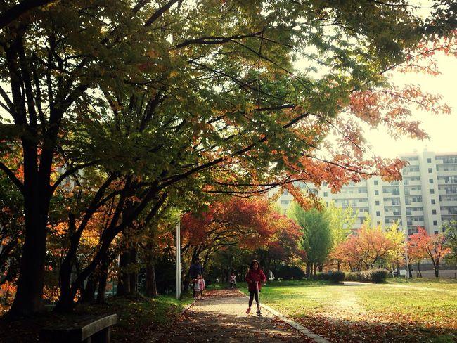 少しづつ 秋の色 Park Autumn Leaves Autumn