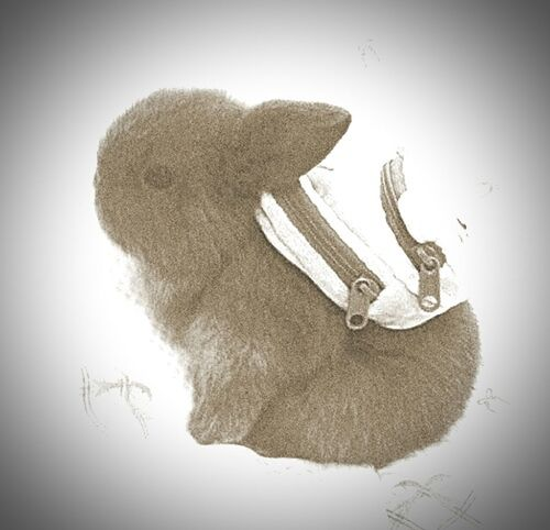 i have never seen somthing so t Cute Rabbit ,bunny