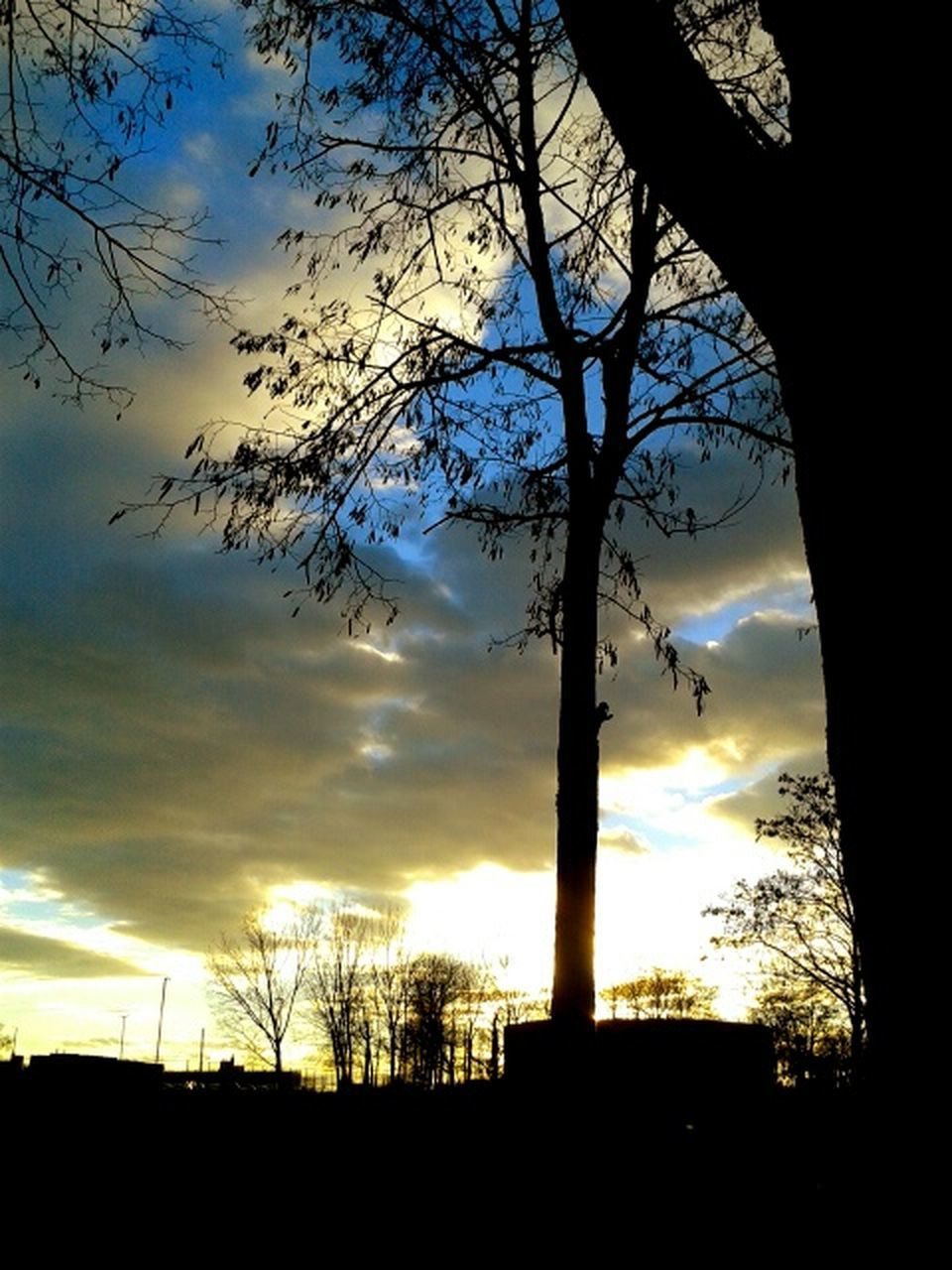 silhouette, sunset, tree, sky, cloud - sky, nature, scenics, tranquil scene, beauty in nature, no people, outdoors, tranquility, low angle view, tree trunk, landscape, branch, bird, day