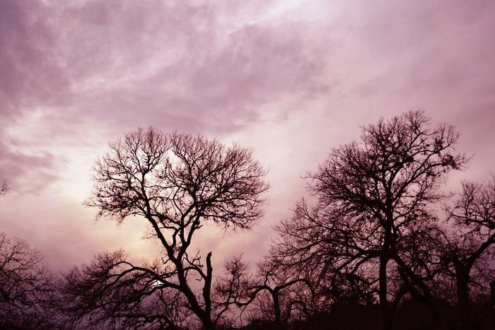 austin life Austin Texas Hanging Out Taking Photos Hello World Check This Out Austin Austintx  Contrast Nature Pink Purple First Eyeem Photo