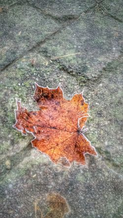 Deepfreeze Frozen Frozen Nature Frozen Leaf From My Point Of View