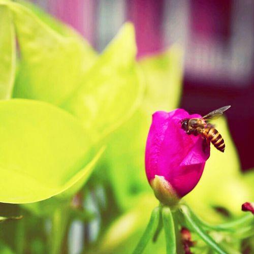 bee Bees Macro Macro Art Macro World Macro Week Macro Photography Macro Nature Flowers