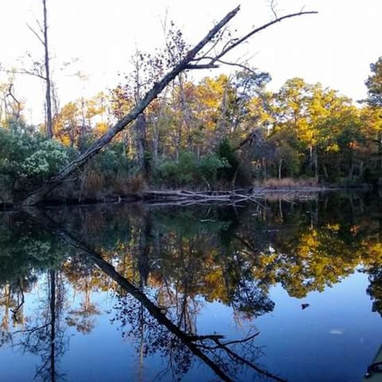 Mirror Image Reflection Water Tree Nature Outdoors No People Beauty In Nature Beautiful Colors Kayaking In Nature On The Water Beautiful Day Calm