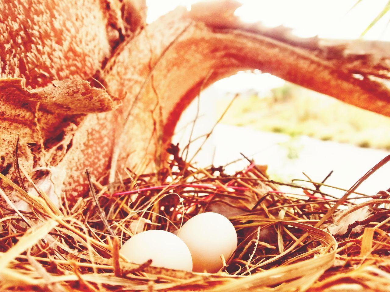 egg, animal egg, new life, fragility, bird nest, no people, cracked, close-up, day, outdoors, nature, animal themes