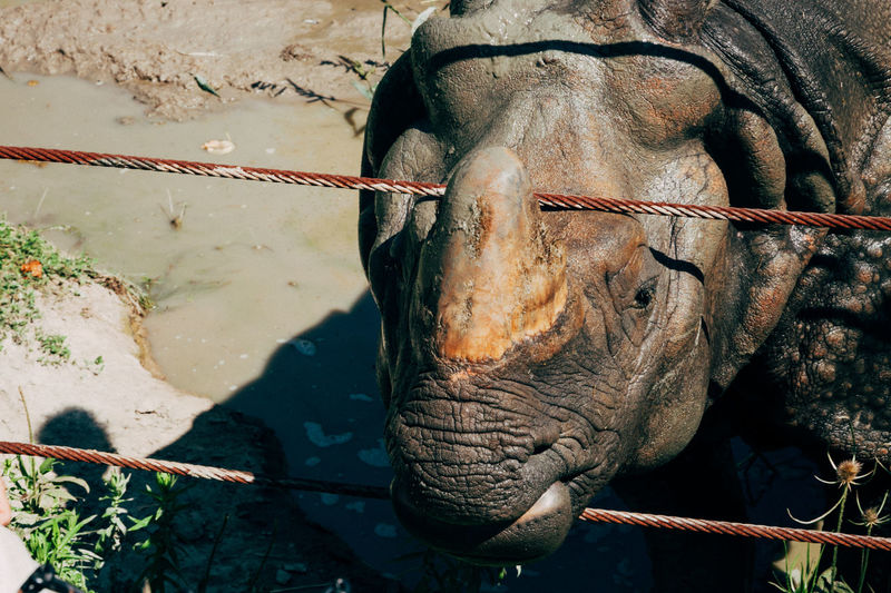 Close-up of rhinoceros by fence