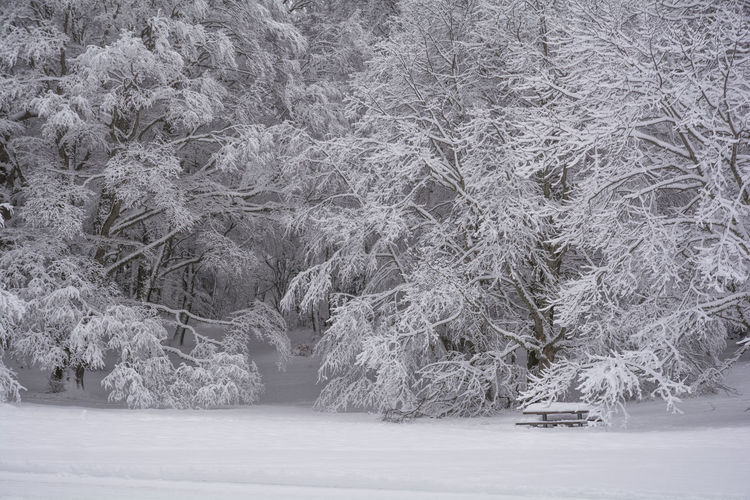 Snowy forest Snow ❄ Wood Beauty In Nature Cold Temperature Day Forest Forest Trees Frozen Ice Landscape Nature No People Outdoors Outdoors Photograpghy  Pic Nic Area Sereny Scene Snow Snowy Forest Tranquil Scene Tranquility Tree Trees And Nature White Background White Color Winter