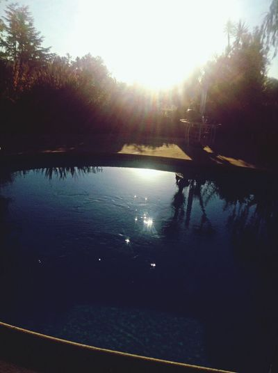 From My Point Of View In My Garden Swimming Pool Sunset The City Light