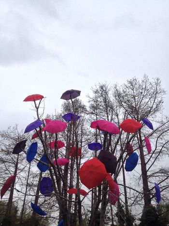 Tadaa Community No Edit/no Filter Umbrella Umbrellas Colors Color Photography Trees EyeEm Best Shots Urban Spring Fever Photography