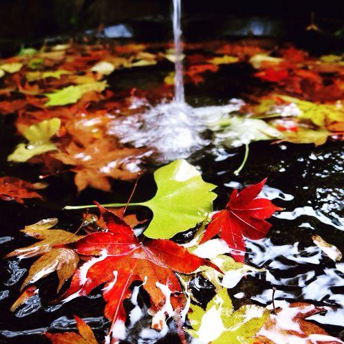 Autumn Japan Autumn Leaves 永源寺