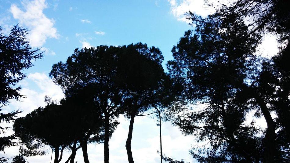 Alberi cielo azzurro Nuvole Bianche Paesaggio Lanskape Colori