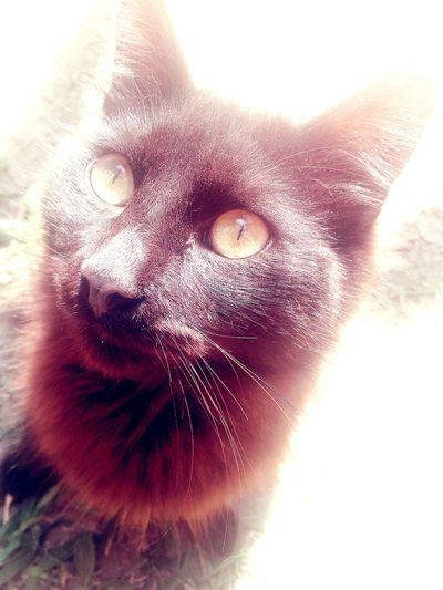 Eyes Observando Srcat Cat PhonePhotography Dongato Followme Capture Lovecat