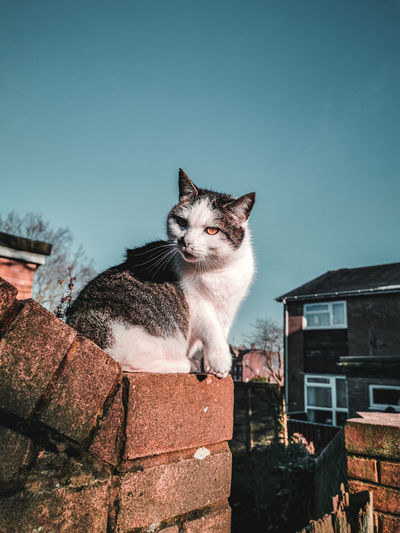 Low angle view of cat sitting against building