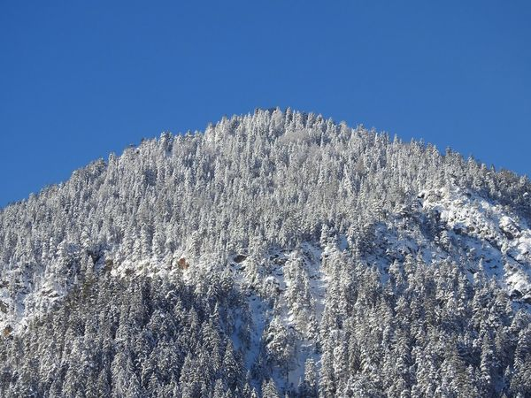 Beauty In Nature Blue Clear Sky Cold Temperature Copy Space Day Low Angle View Mountain Nature No People Outdoors Scenics Snow Tree Winter