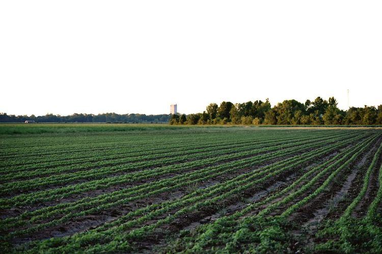 Photo Rural