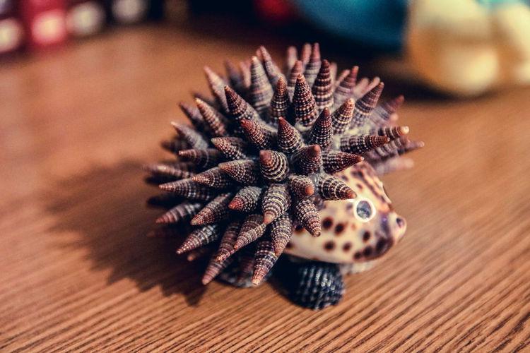 Hedgehog from shells