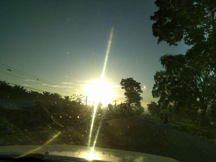Tree Car No People Sun Sky Sunlight Nature