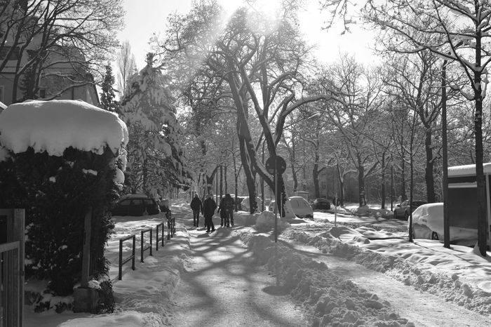 Cold Temperature Germany Munich Outdoors Residential District Snow Snow Covered Street Trees Walking Winter Winter