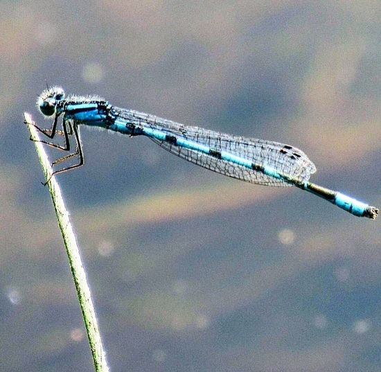 Outdoors Nature Ontario Iamcanadian Canada Countrylife Country Living Water Pond Macro Nature Macro Photography Dragonfly Insects  Closeup In Nature