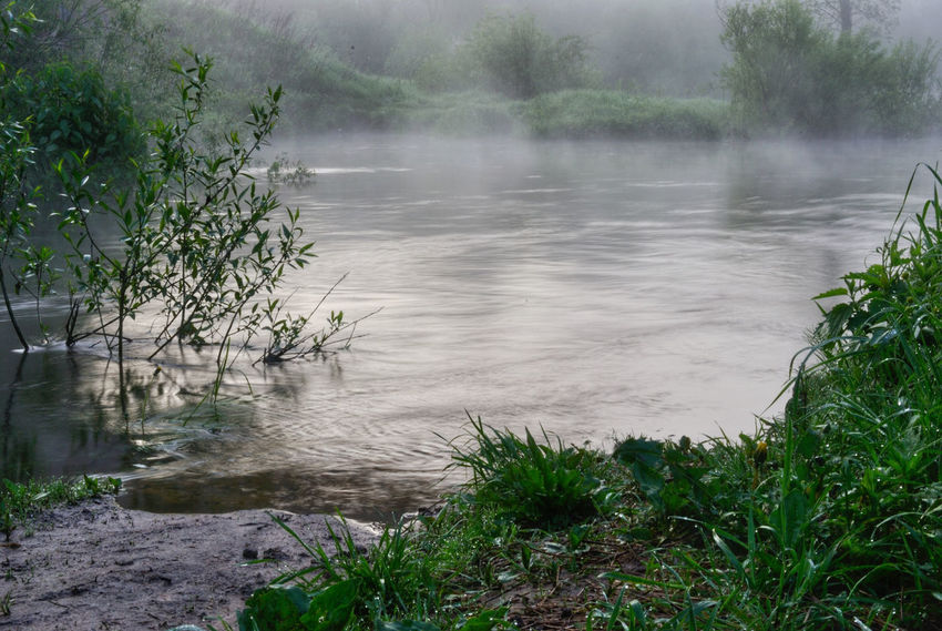 Beauty In Nature Branch Calm Countryside Creek Green Green Color Growth Idyllic Mist Morning Nature No People Non-urban Scene Plant Remote River Riverside Scenics Smoke On The Water Tourism Tranquil Scene Tranquility Tree Water