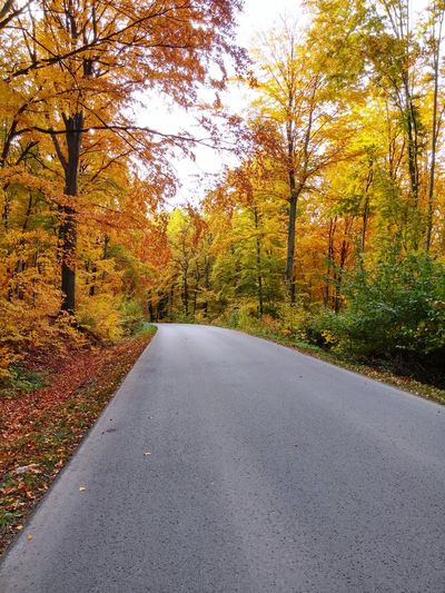 Tree Road Autumn Asphalt Change Leaf Sky Double Yellow Line Empty Road Mountain Road vanishing point Yellow Line Country Road The Way Forward White Line Road Marking Winding Road Passing Dividing Line Crash Barrier First Eyeem Photo