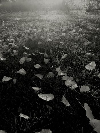 Fall Fallen Leaves Fall Beauty Stolen Color beauty in Nature Field Nature Outdoors Surface Level Sunrise Morning Light Depth Of Field Perception Perception Is Reality Perception Is Not Reality Atmospheric Mood Fine Art Photography