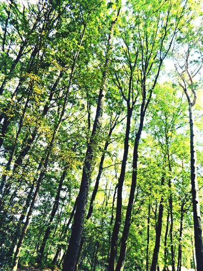 Foret Tree Arbre SilléLeGuillaume Nature Meditation Namaste Spiritualité France Forest