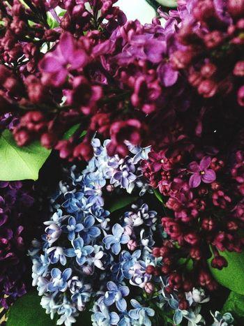 Flower Minsk Nature