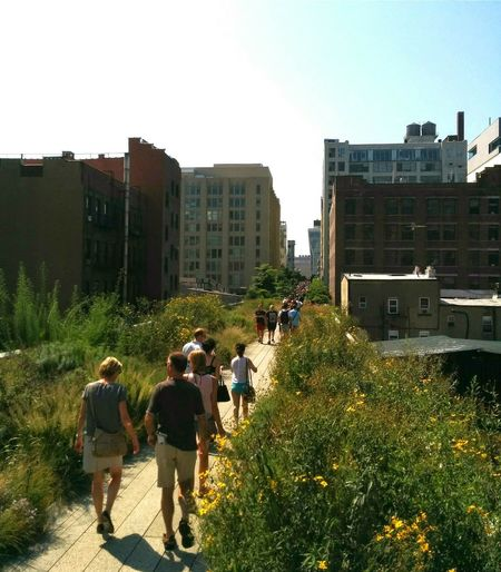 The High Line City Outdoors Urban Skyline Cityscape City Park The High Line, Downtown , Manhattan The High LIne New York City New York City Summer Grasses